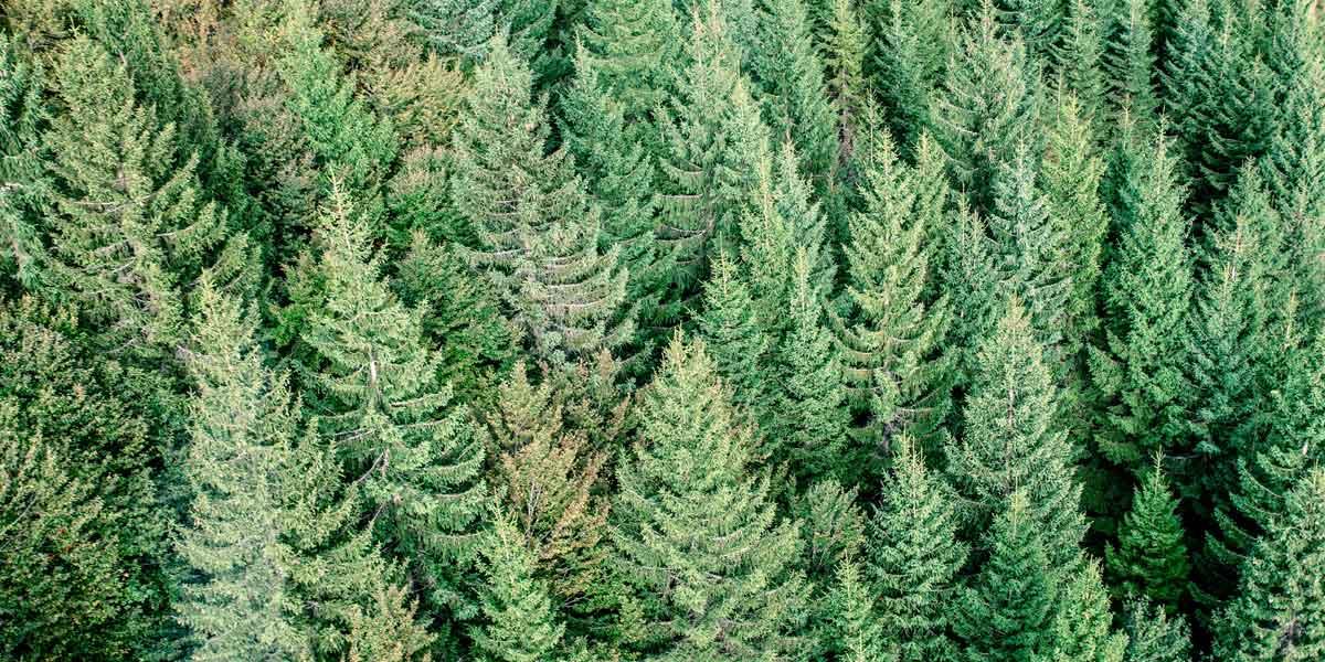 les sens du bois